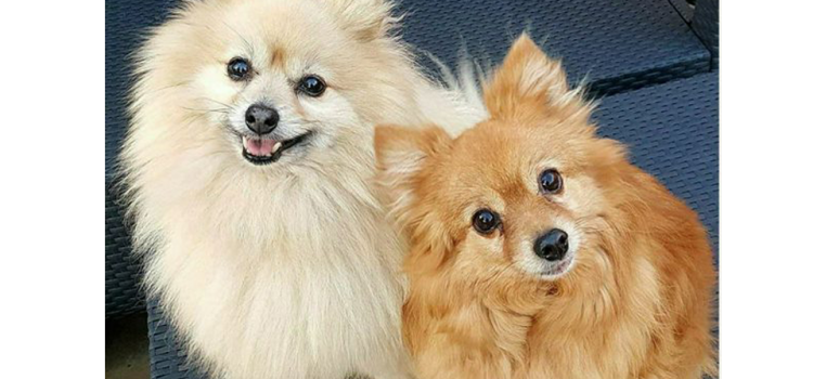 Bobby and Foxy – Aged 8 and 10 years – AVAILABLE