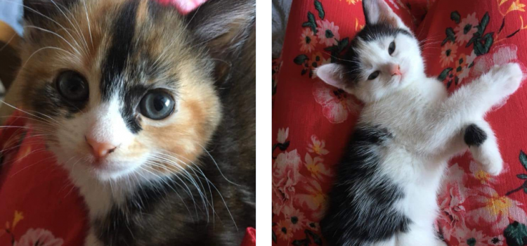 Cookie and Crumble – Date Of Birth May 2018 – REHOMED