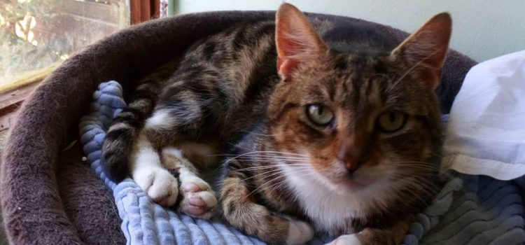 Meet Tigger – Date Of Birth 2014 – AVAIALBLE