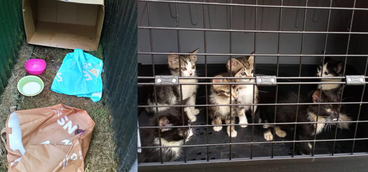 21 July 2018 – Kittens Dumped