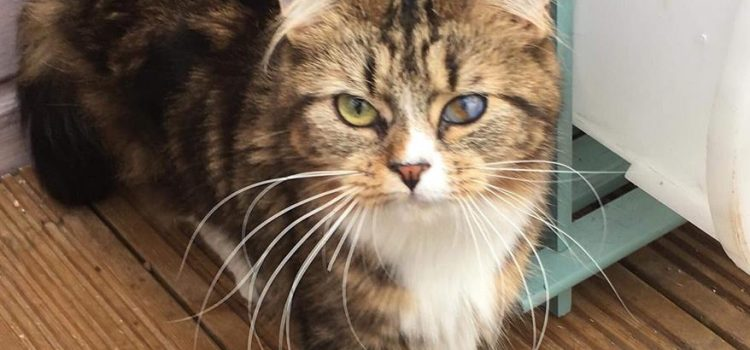 Tabitha – Date Of Birth 2017 – REHOMED