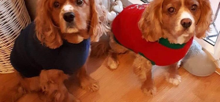 Izzy and Beau – REHOMED