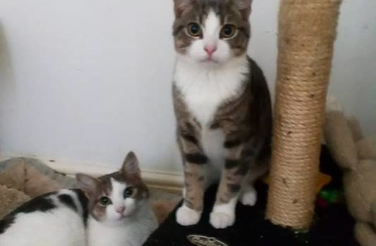 Saffy and Digby – AVAILABLE